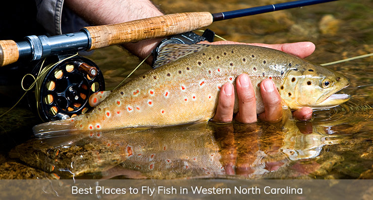 best places to fly fish in western north carolina landmark realty group