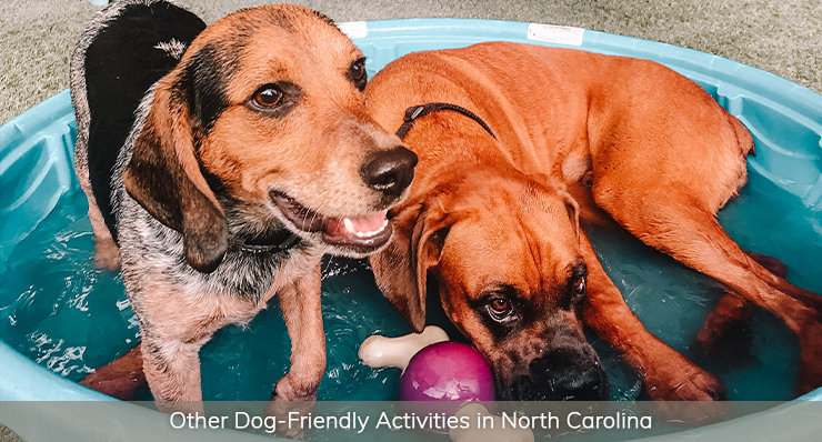 other-dog-friendly-activities-in-north-carolina-landmark-realty-group