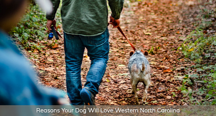 reasons your dog will love western North Carolina