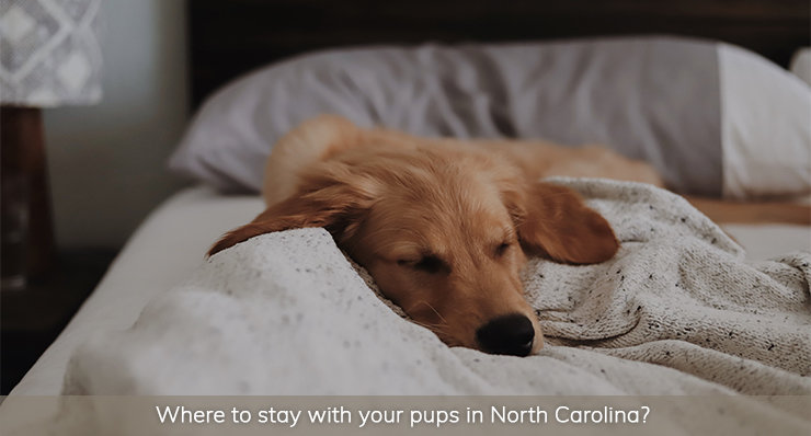 where-to-stay-with-your-pups-in-north-carolina