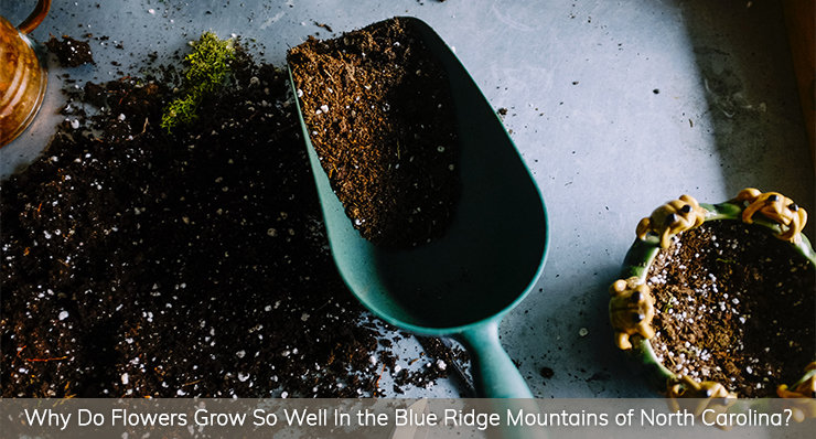 Why-do-flowers-grow-so-well-in-the-blue-ridge-mountains-of-north-Carolina-landmark-realty-group